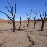 May 3 Dead Vlei trees CIMG1715